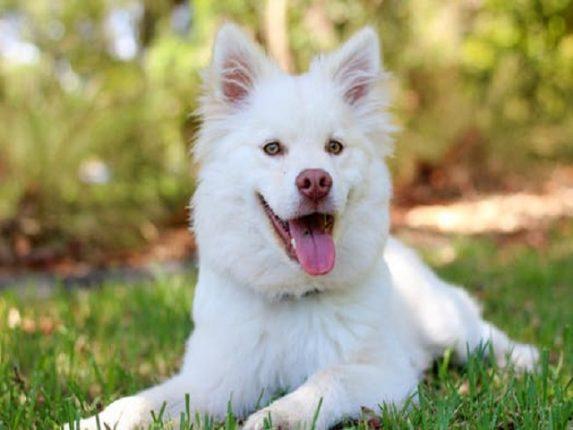 Vit hund på gräsmatta
