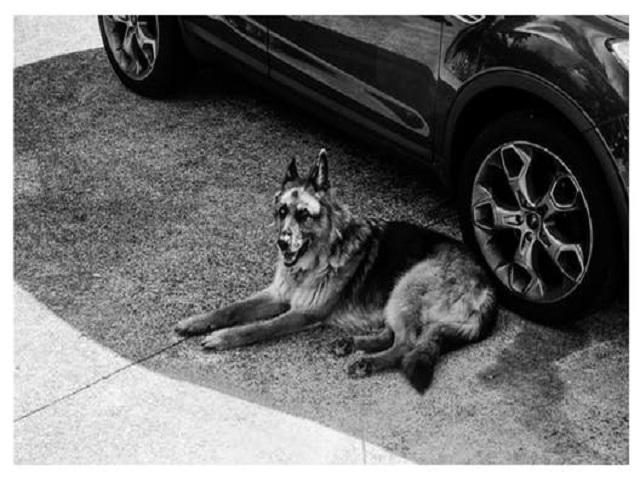 Hund utanför bil